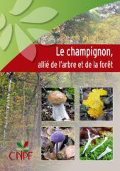 champignon allié de l'arbre et de la foret