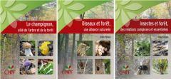 Bandeau_foret_champignons_oiseaux_insectes